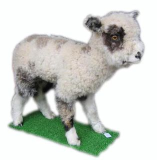 Stuffed Lamb Standing