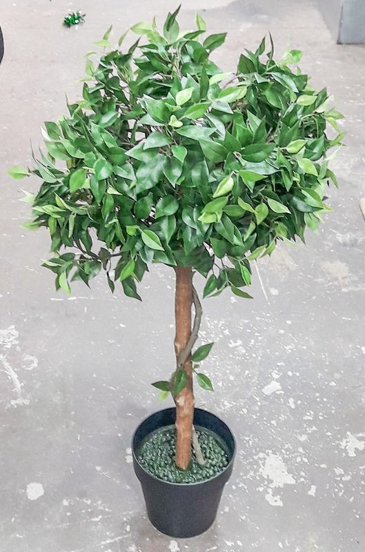 Ficus Trees Topiary 1.1m (2 in stock)
