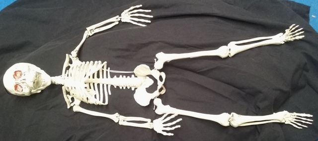 Skeleton Small Hanging  (90cm) 2 in stock.